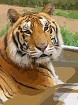 tiger-42444_150.png
